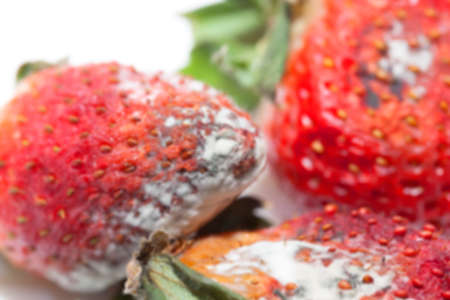 grotesque: photographed red ripe strawberries, covered with white mold, spoiled strawberries closeup, defocus Stock Photo
