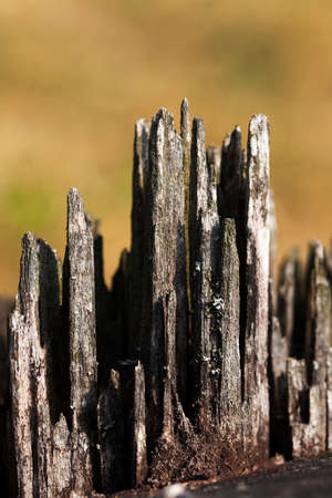 photographed close-up of an old fracture of the tree, a small depth of field