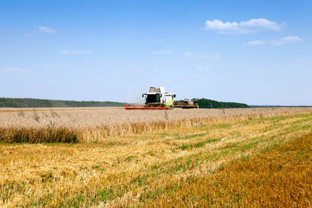 agriculture - agricultural field with cereals during harvest. summer