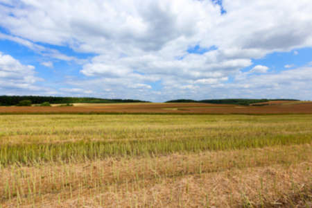 adult rape: agricultural field, which collect ripe canola crop farming summer, Defocus Stock Photo