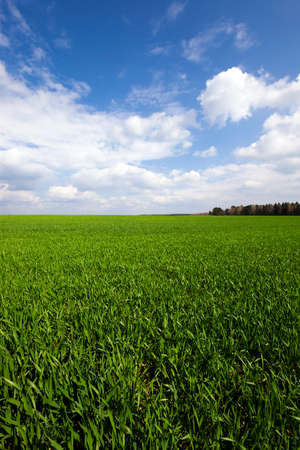 bourgeon: Agricultural field on which grow up cereals
