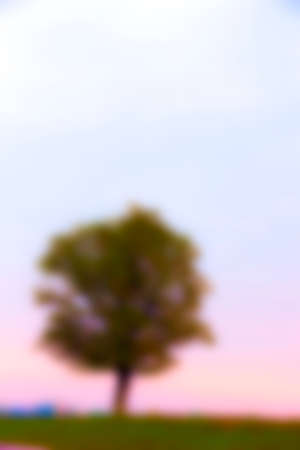 reveille: photographed close-up of a tree growing in the field, autumn season tree silhouette of the sun dawns photos are out of focus - defocus,