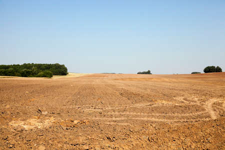 leftovers: plowed agricultural field after harvest, sky and trees in the background