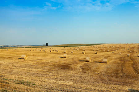 remained: agricultural field, where on earth remained on the wheat straw after harvest