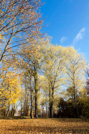frondage: photographed close-up of yellowed and fell to the ground leaves of the trees, the sky,