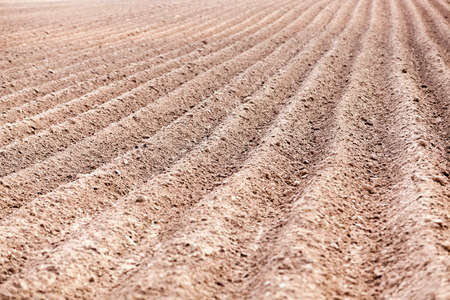 plowed agricultural field in which the crop is grown, the furrows in a field, close-up Stok Fotoğraf