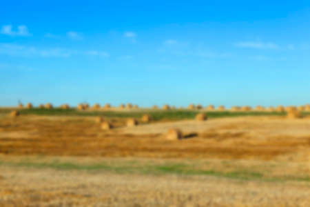 golden section: Agricultural field on which stacked straw haystacks after the wheat harvest, defocus Stock Photo