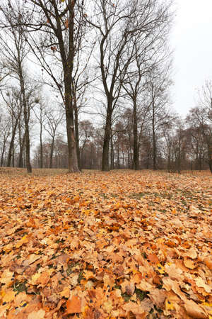 a park in the autumn, during cloudy weather, late autumn, a small depth of field