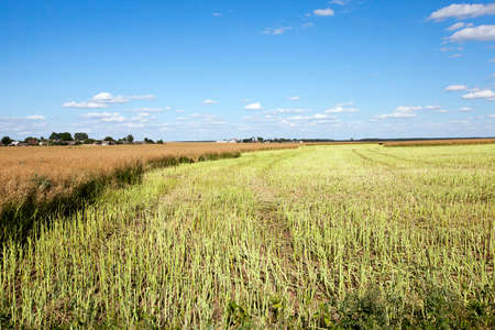 an agricultural field, which carried out the rape harvest, summer, Stock Photo
