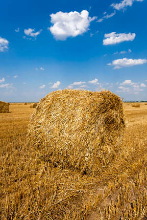 an agricultural field where harvested cereals and straw collected in a stack. summer