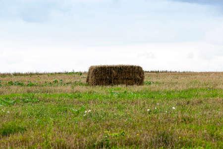 小麦の収穫後干し草の山。正方形の形と撮影のクローズ アップがあります。曇り 写真素材