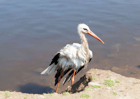 lacks: photographed close-up of a stork, which lacks the wing,