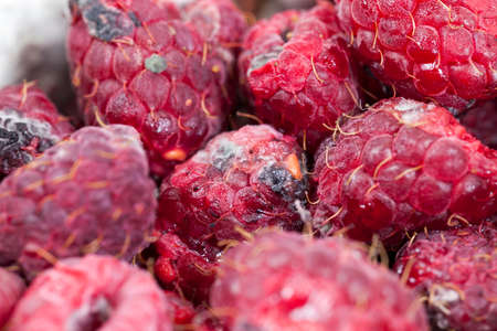photographed ripe red raspberries, which appeared mold, a small depth of field Stock Photo