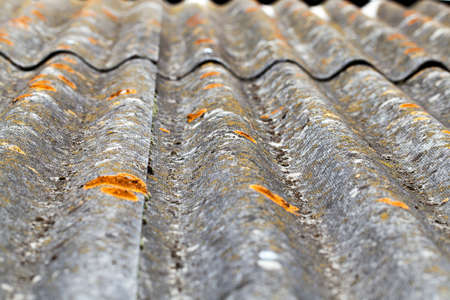 slate covering the roof of the building. On the slate visible light green moss and mold. Shallow depth of field, close-up photo