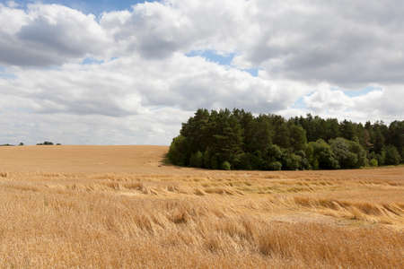 battered land: field of ripe cereal Stock Photo