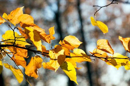 frondage: bright foliage limes