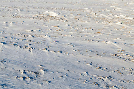 sheeted: land covered with snow