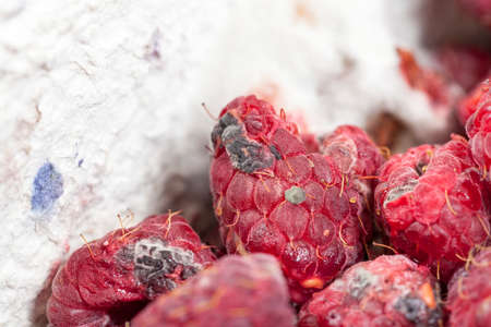 mold on the raspberries