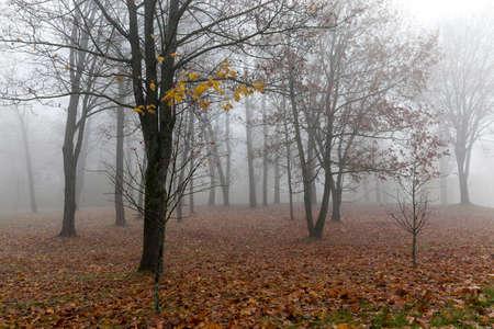 surly: Photo autumn park Stock Photo