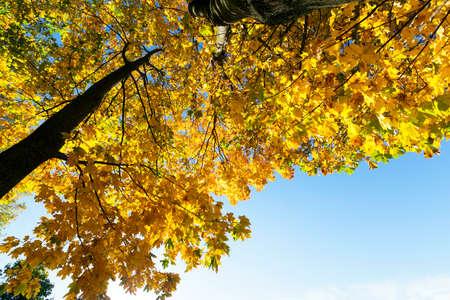 autumn yellow park