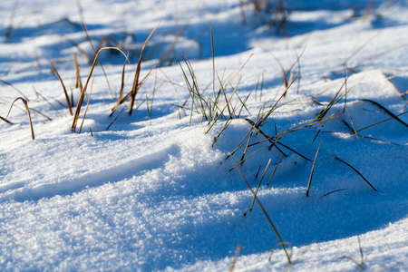close-up photograph taken at an angle by a surface covered with white snow after a snowfall. Dry grass sticks out of the snow. Small depth of field Stock Photo