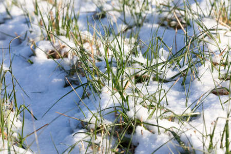 cold: snow photographed in the winter season, which appeared after a snowfall. close-up, Stock Photo