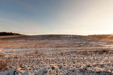 cold: Agricultural field covered by snow, which are dry cut stalks of wheat. In the background is a forest. Photographed against the sky. One can see the rays of the sun.