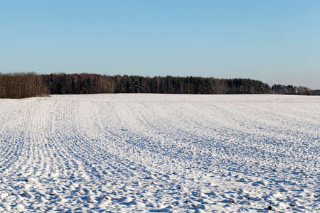covered by snow plowed agricultural field with irregularities. Against the background of the blue sky and the forest. Stock Photo