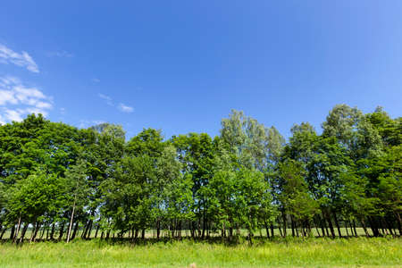 Trees growing on the side of the road with green foliage. Spring landscape with vegetation and blue sky