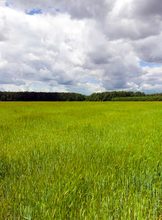 Landscape with green grass on a meadow. Forest and a cloudy dark sky in the photo. Stock Photo