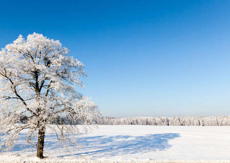 Winter season. Photo Stock Photo