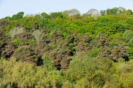 Mixed forest Stock fotó - 87843410