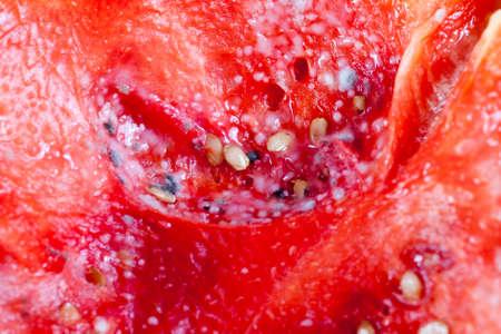 mold on watermelon