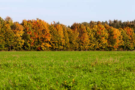 discolored: Autumn Trees