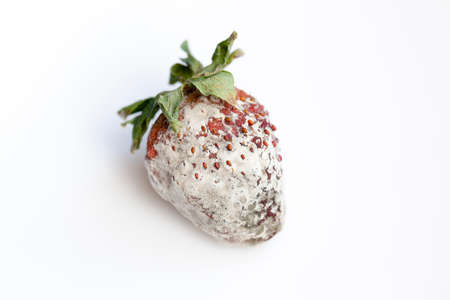 Mold on a strawberry
