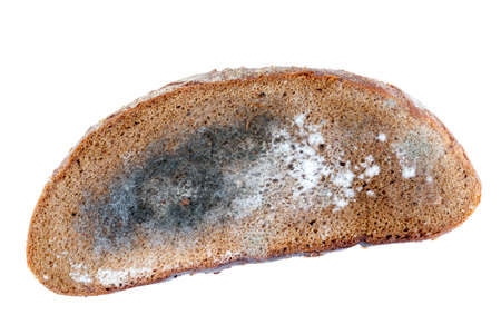 a piece of rye bread with white and black mold on it, close-up isolated on white Banque d'images