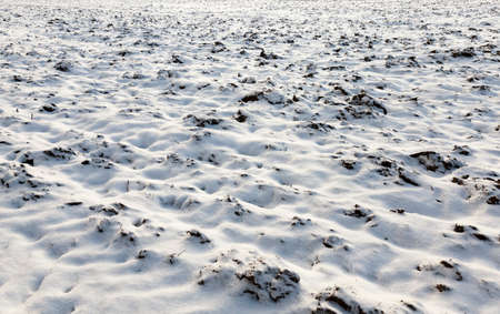 plowing the soil on the field, covered with snow and drifts, the winter season