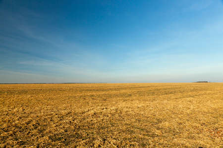 agricultural field with yellowing grass dying in the autumn season, Photo of landscape, blue sky in the background 版權商用圖片