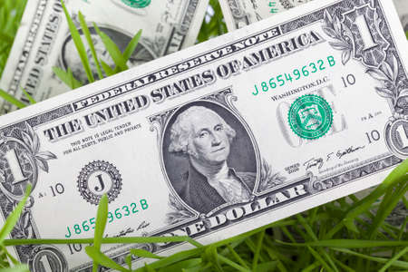 Lying on green sprouts of wheat or other cereal one-dollar bills, closeup Stockfoto