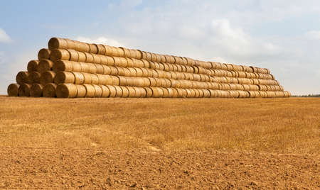 Stacked together in a huge stack of cylindrical rolls of straw for storage during the winter, the summer landscape