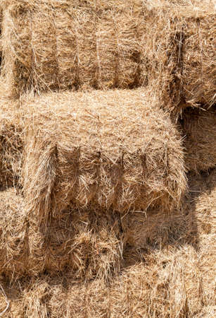 pressed square bales of dry ripe straw straw yellow, folded in rows in the hayloft