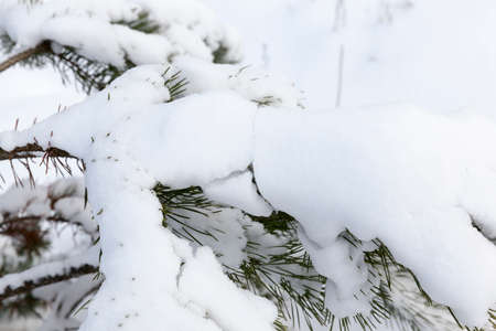 Snow photographed in the winter season, which appeared after a snowfall. Close-up. Stock Photo