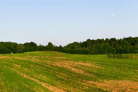 Summer landscape with green grass and spots of overgrown soil and forest, against a blue sky background