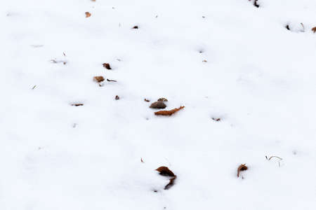 dry and rotten foliage of trees under the snow, winter nature Imagens