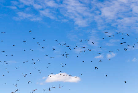 black birds flying in a cloudy sky landscape 写真素材