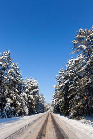 trees growing in the forest, on the branches of the fir tree lies snow and presses them to the ground,snow storm against the blue sky, road is built across the forest Фото со стока