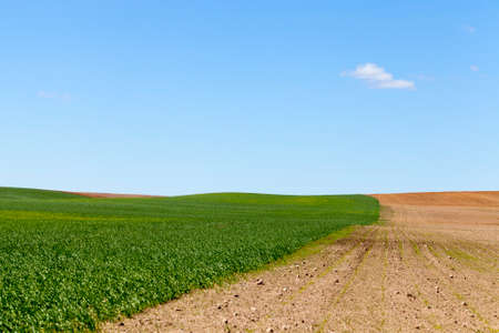 An agricultural field divided into two halves, on one grows green grass and another plowed soil