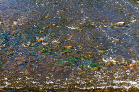 Waves in the water of a small lake but which is covered with stones and algae Banque d'images