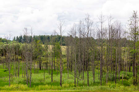 marshy area with low trees and green grass, summer or spring landscape Reklamní fotografie