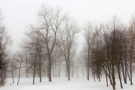 Beautiful tall mature trees in winter covered with snow in frosty weather Stok Fotoğraf